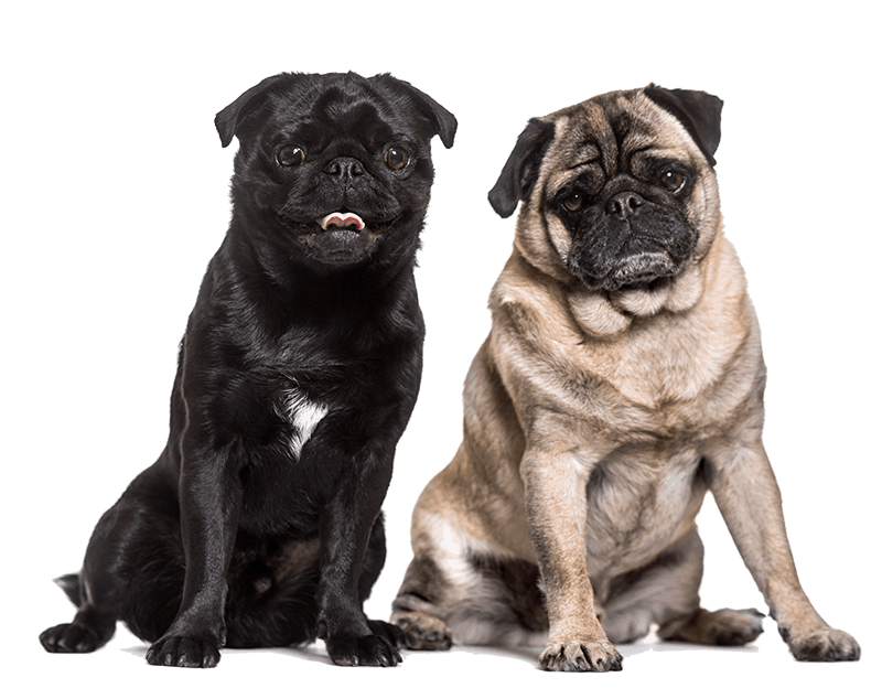 Caring for the Pets of Omaha for over 27 years Dog Boarding Dog Daycare
