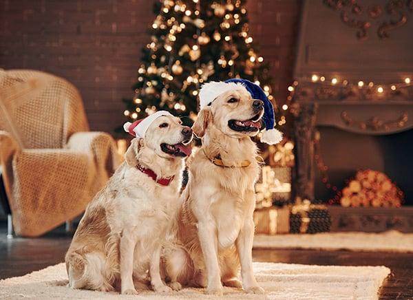 Holiday Pet Sitting Omaha