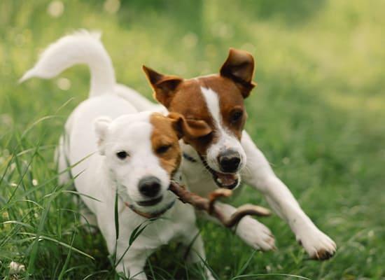 Dog Daycare Omaha