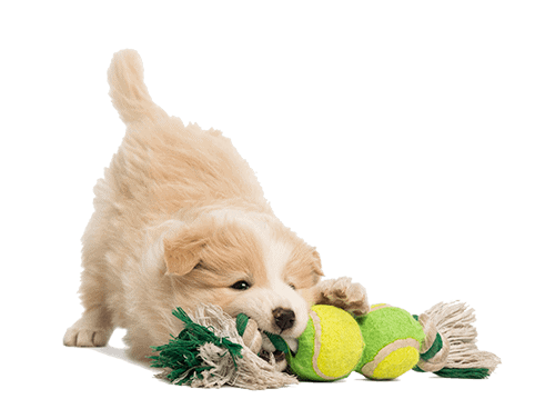 specialized pet services about us omaha