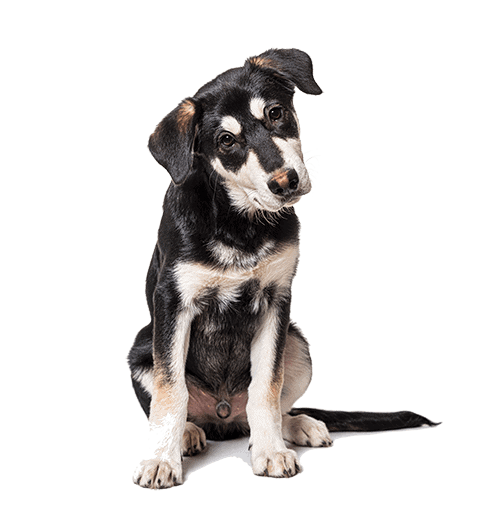 what our clients are saying dog boarding omaha